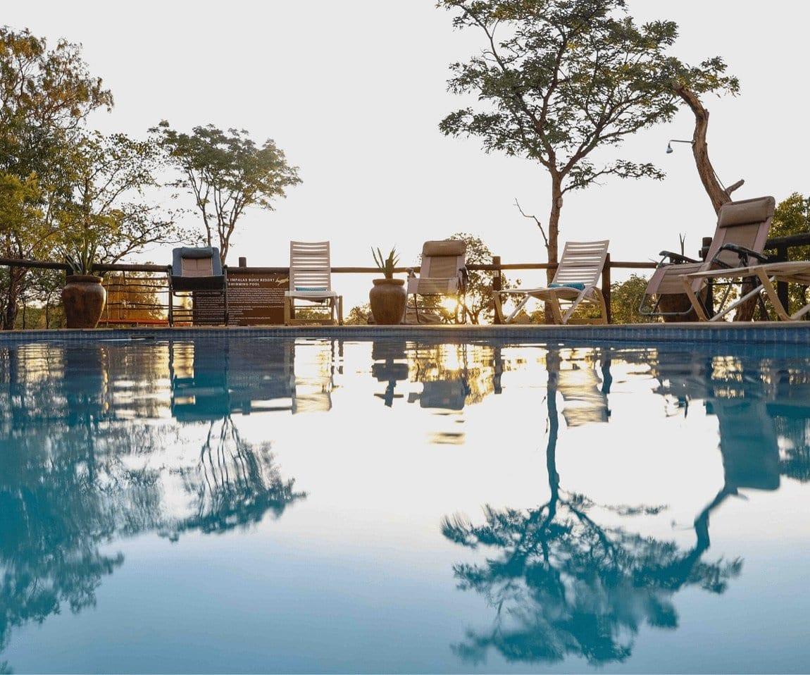 Golden Impalas - swimming pool