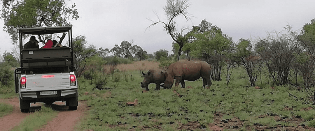 Black Rhino Game Drive at Dinokeng Game Reserve